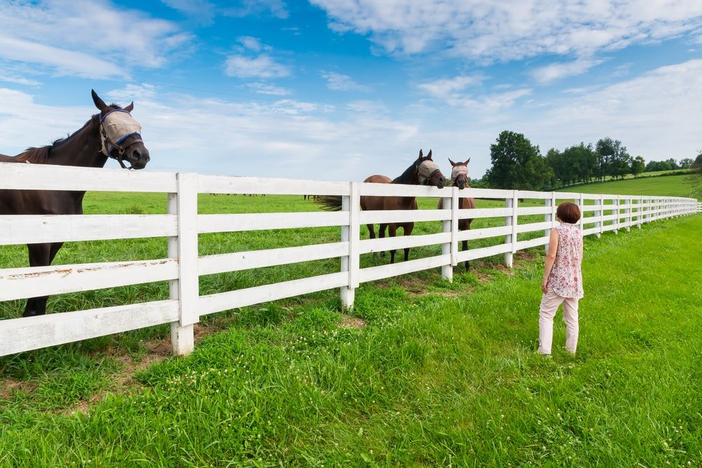 Horse farm in Lexington, Kentucky