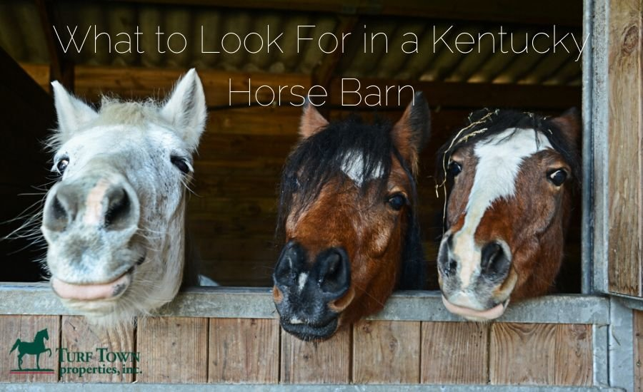 What to look for in a Kentucky horse barn