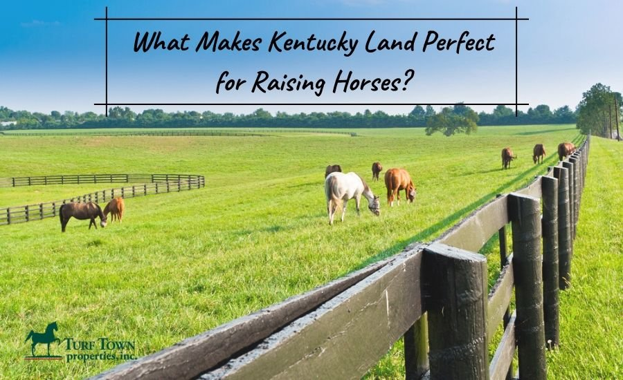 Kentucky land for horses