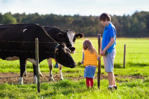 Kids Feeding Cows on Farm