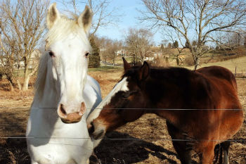 horse farms with wire fencing for horses