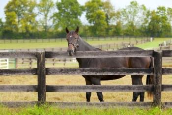 Horse Farm Fences Fence Choices For Central Kentucky Farms