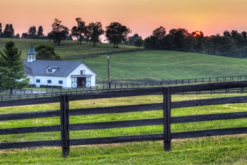 Park Farm Oakley Horses For Sale